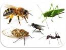 Trappole per la cattura e il monitoraggio degli insetti